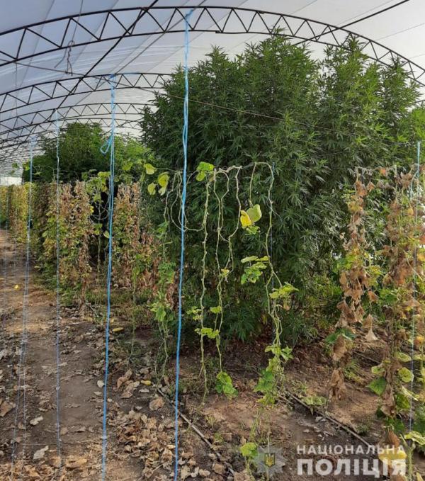 В Запорожской области женщина вырастила наркотическое растение размером с дерево (ФОТО)
