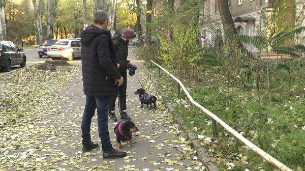 В Запорожье завели уголовное дело на мужчину, который убил свою собаку (ФОТО)