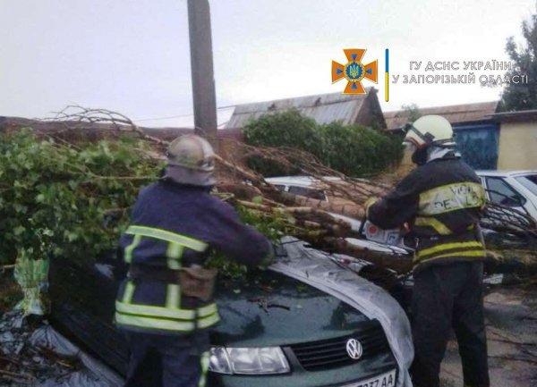 В Запорожской области два дерева упали на крышу автомобиля (ФОТО)