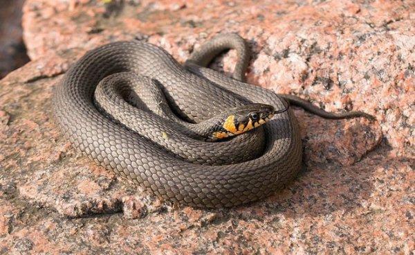 В Запорожье женщину укусила змея