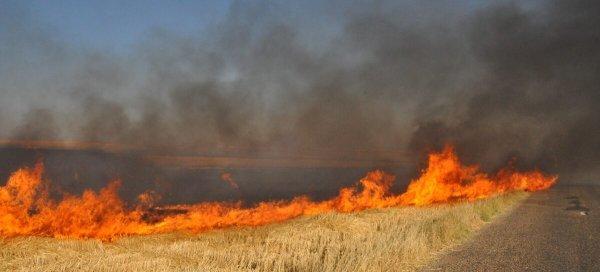 В Запорожской области предупреждают о повышенной пожарной опасности