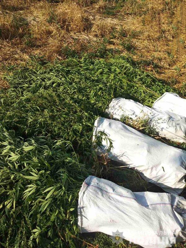 В Запорожской области обнаружили плантацию наркотических растений (ФОТО)